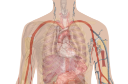 zelle gewebe organ organsystem organismus arbeitsblatt | Wissenature