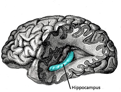 Funktion Hippocampus